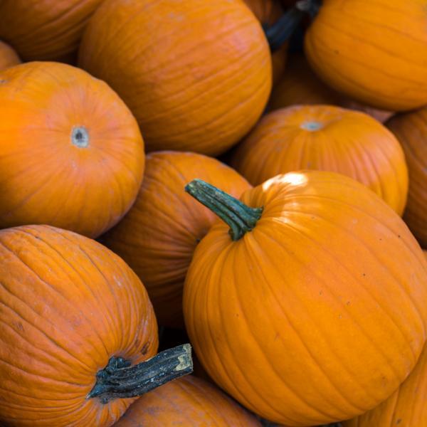 Halloween pumpkins at Sainsbury's